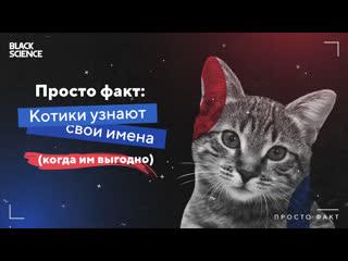 Просто факт: Котики узнают свои имена (когда им выгодно)