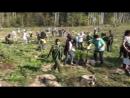 Посади свое дерево ! Ансамбль песни Русские напевы 2018год