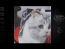 Приколы с Котами ДО СЛЁЗ Смешные коты и кошки 2017 _ смешное видео про кото.mp4