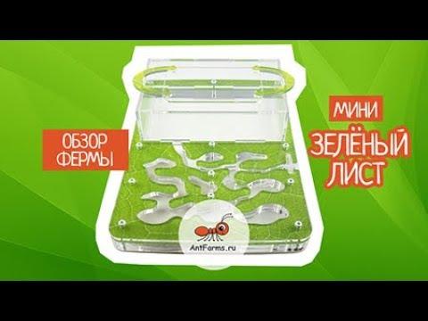 Видео обзор муравьиной фермы Зеленый лист Мини