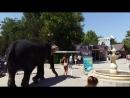Sloni evpatoriya.mp4