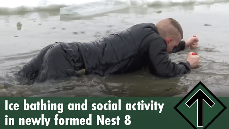 Ice bathing and social activity in newly formed Nest 8