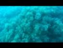 А как ваш ребенок проводит время летом 🌊🐟немосапиенс морскиежители нунаконецто дайвинг ольгинка орбита дайвингольгинка