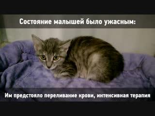 СОС_Джулиан_Глория