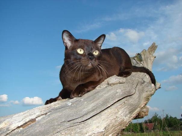 жил был кот. кот цвета кофе. каждый день он просыпался рано утром, умывался, одевался и шел на работу. по крышам. кошки у него не было, котят тоже, в общем, нормальный такой кот. а. да. он был