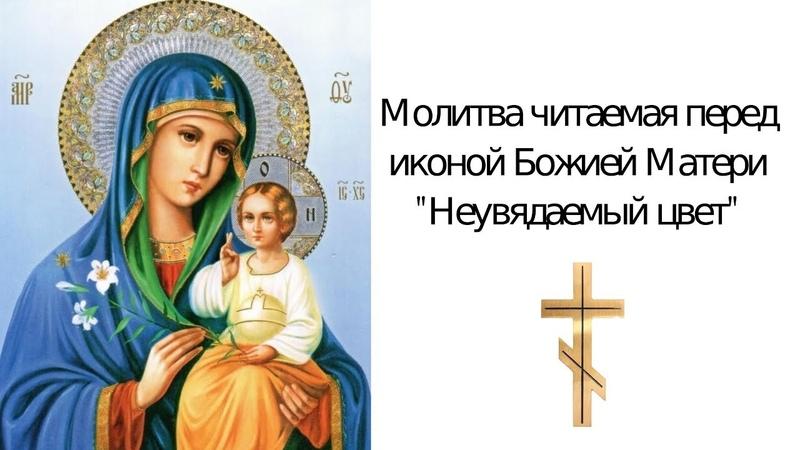 Молитва о замужестве иконе Неувядаемый Цвет Божьей Матери