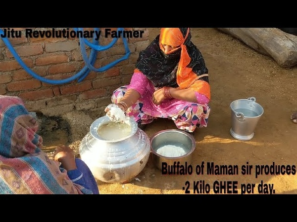 (Part III) GHEE-Line Buffalo. 2 Kilo Ghee per Day- Maman Dairy Village KARODHA, District-Jhajjhar.