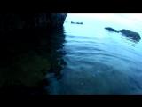 Краб-скалолаз, рыбка - Сусанин, оборзевшая креветка,