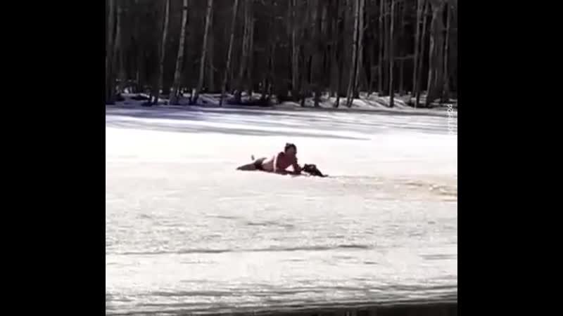 В Петербурге мужчина спас собаку из ледяного плена