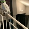Parrot says hello and ...