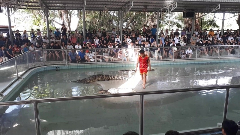 Мучитель крокодилов. Паттайя. Тайланд.