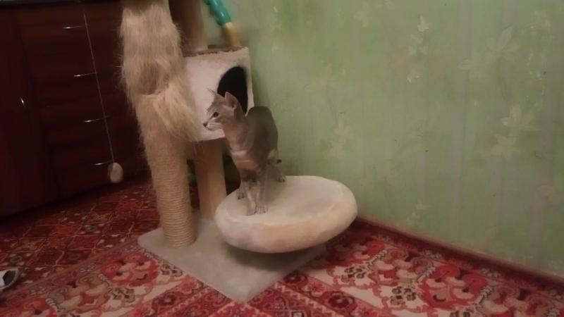 Кася и мышка