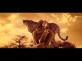 33Tours - California Dreamin Video Edit
