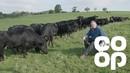 Co-op Food | Meet the Producer - Aberdeen Angus Beef