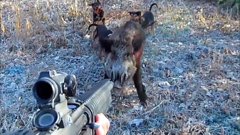 ProHunt 2018 istanbul fuarında Barak Arms standında yayınladığımız video!Excellent Wild Boar Hunts!