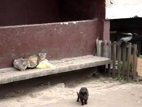Три кота и ворона