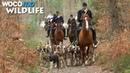 Le cheval entre chasse à courre et saut d'obstacles D'une vie à l'autre