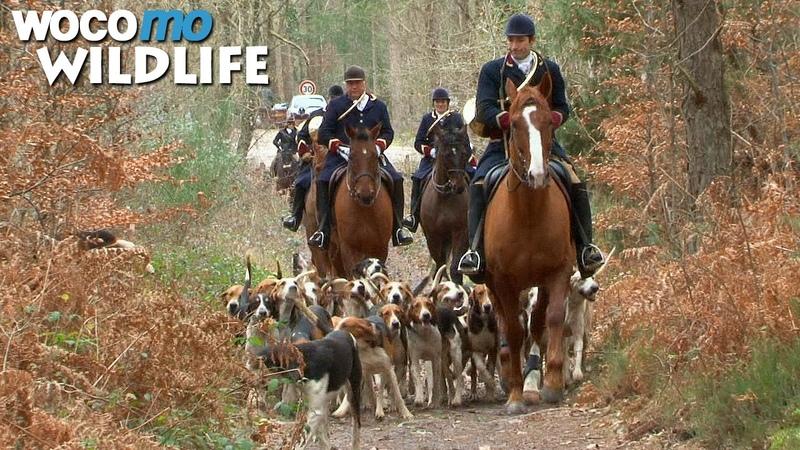 Le cheval, entre chasse à courre et saut d'obstacles - D'une vie à l'autre
