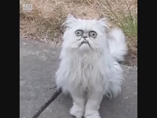 Если бы понедельник был котом