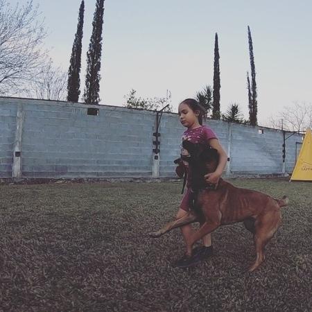 "Sarah Prelle on Instagram: ""She might be the cutest 💕 kidsanddogs malinoispuppy malinois maligator malinoislovers malinoisofinstagram belgia..."