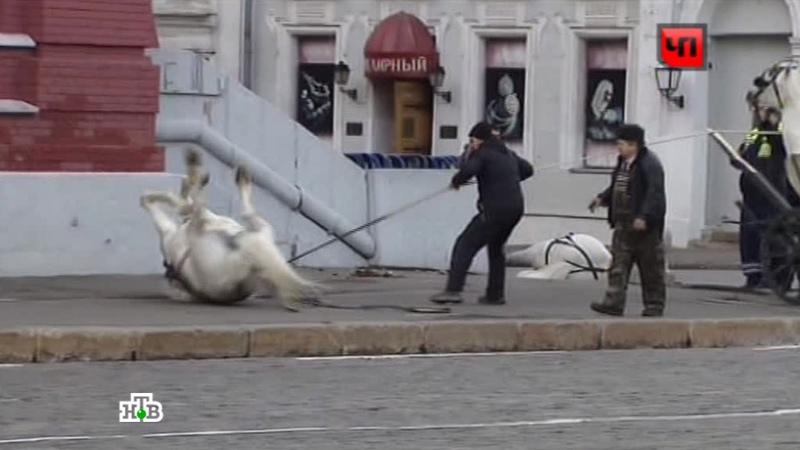 Обезумевшие лошади устроили переполох на Красной площади видео