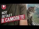 Кот поселился на бывшем военном аэродроме (и даже летает в кабине пилота!)