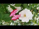 Бабочки канзаши за 5 минут/ Kanzashi Butterflies in 5 minutes DIY / Mariposas Kanzashi en 5 minutos