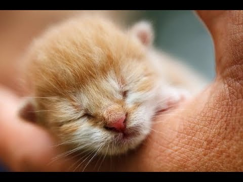 Best Of Cute Baby Animal Videos Compilation | Cute Dogs and Cats