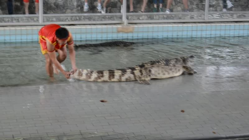 Шоу крокодилов 1