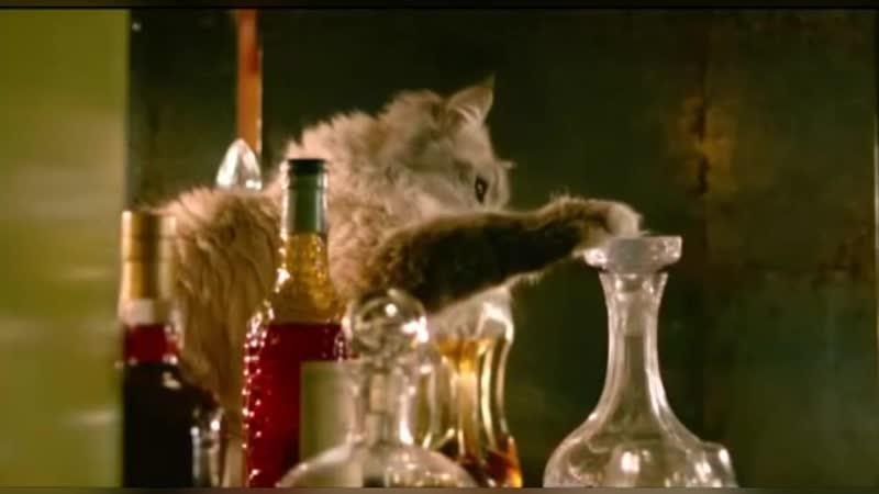 Кот алкоголик - Горе в семье...