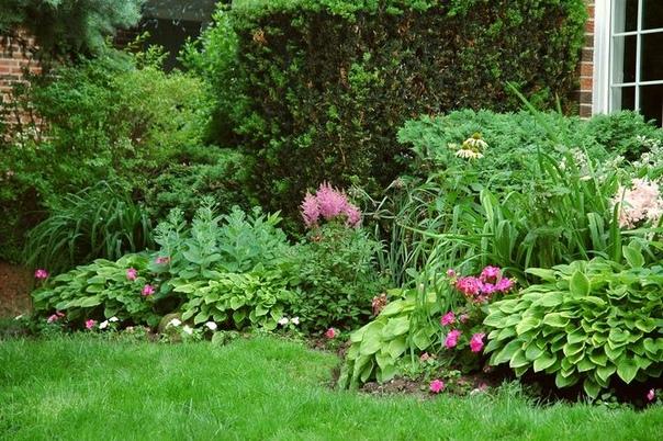 Теневыносливые растения Не всегда дачный домик может похвастаться идеальным месторасположением относительно сторон горизонта. И нередко случается так, что больший объем сада находится с северной