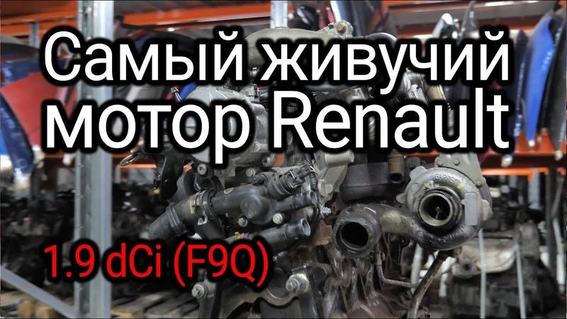 Надежный или неудачный? Разбираем все проблемы дизеля Renault 1.9 dCi (F9Q)