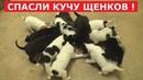 Спасли сразу МНОГО ЩЕНКОВ.Трогательная история спасения.Ветеринарное ранчо