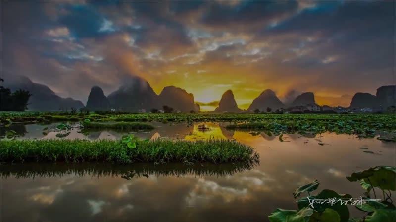 Лотосовое болото в Гуанси