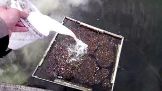 Уход за водоёмом, обработка известью! Пруд для разведения раков рыбы на даче!