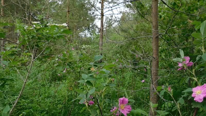 В лесу 3365