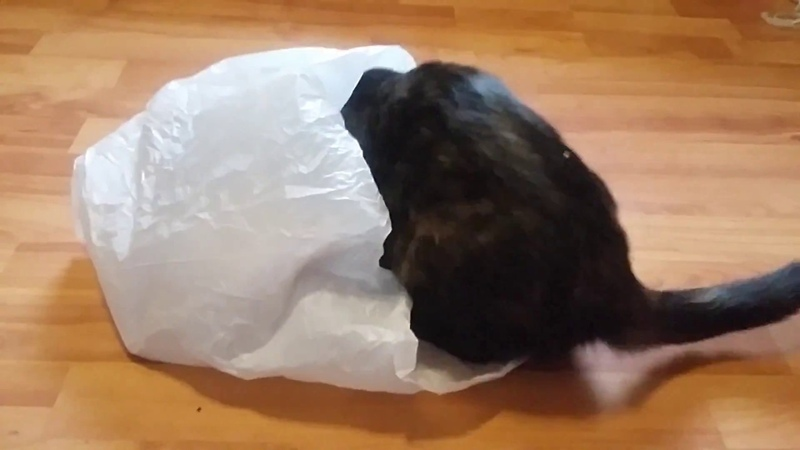 Реакция котят на пакет.The reaction of the kittens on the package.