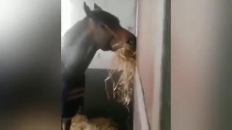 Удивительные случаи взаимовыручки у животных