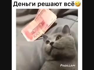 Даже, если ты - кот 🐱