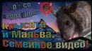 (Н) Кусючий пасючок Пипин, или как Мальва в блогеры подалась! (Wild Rats | Дикие Крысы)