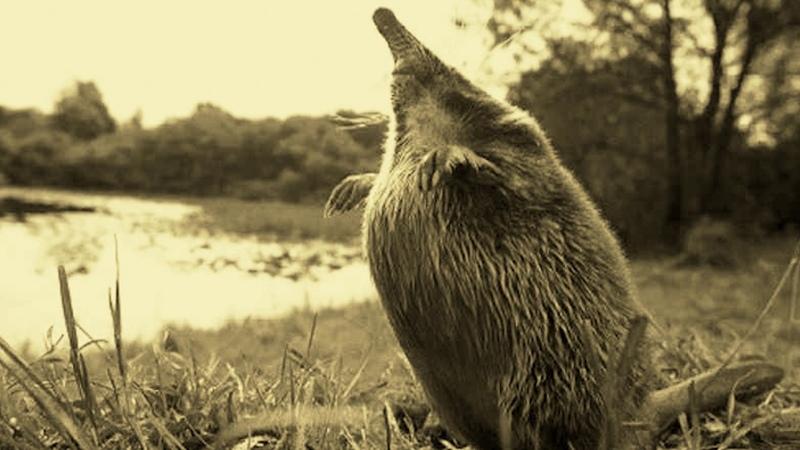 Окский государственный природный биосферный заповедник. Презентация
