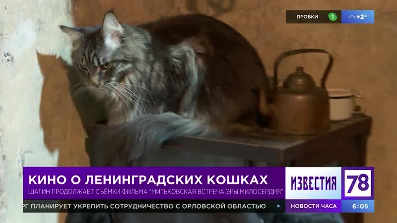 Кино о ленинградских кошках