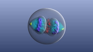 Mitotic cell atlas: track proteins during cell division