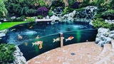 Garden Designs TOP 3 MOST BEAUTIFUL BACKYARD FISH PONDS IN THE WORLD
