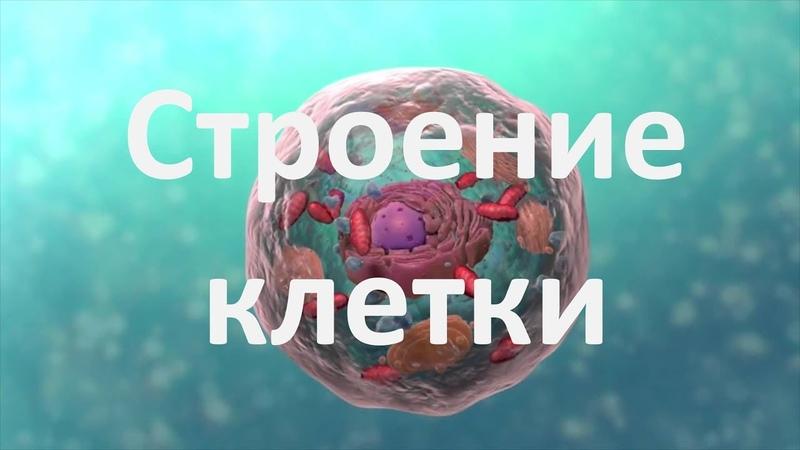 8. Строение клетки (9 или 10-11 класс) - биология, подготовка к ЕГЭ и ОГЭ 2018