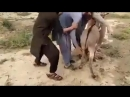 Pathan with donkey funny