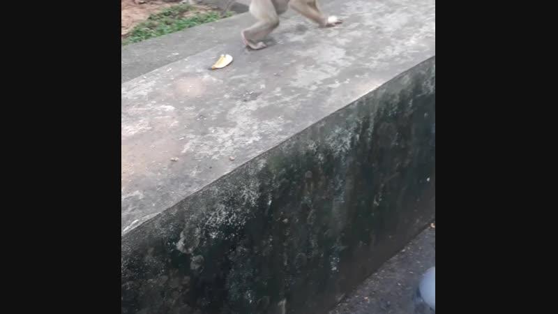 гора обезьян, о.Пхукет