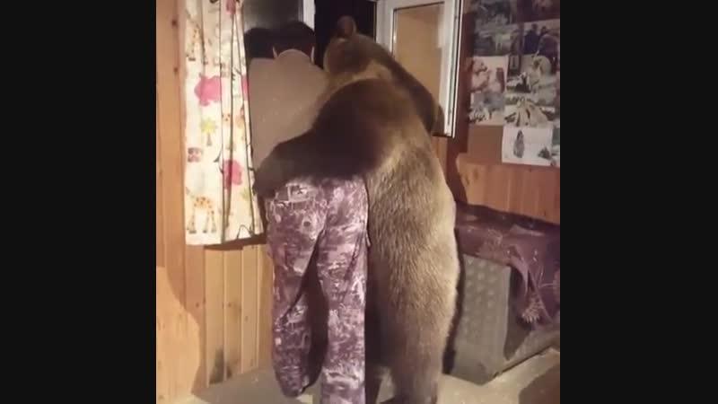 Когда повздорили с мужиком, но медведь мягче характером и первый идет мириться 😂
