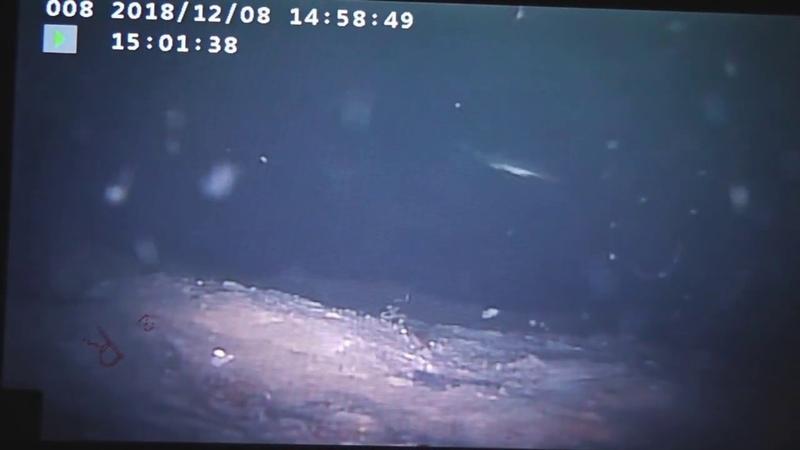 подводная съемка рыбы зимой