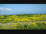 Кипр. Тропа Афродиты